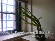 Nov 24 - Growth, Development & Signalling (1)