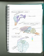 Anatomy External Posterior View Notes