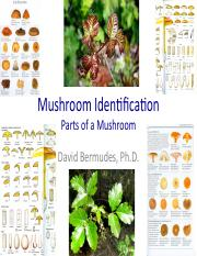Mushroom Identification Part A.pdf