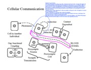 4-Cell Communication Figs BW