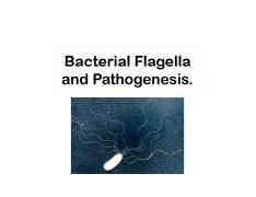 Lecture 2 - Bacterial Flagella and Pathogenesis.pdf