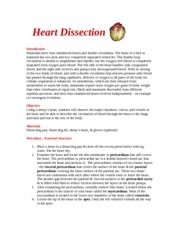 Heart_Dissection