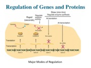 Lecture 6_Reg of DNA and proteins