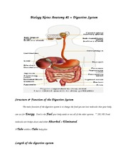 Digestive System anatomy notes