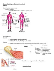 Exercise Physiology - muscle final