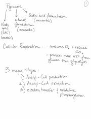bis103 lecture5complete-2