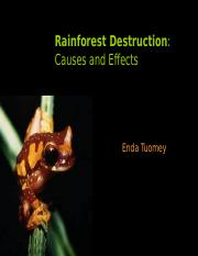 rainforest.ppt