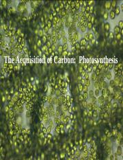 Light reactions of Photosynthesis Fall 2017.pdf