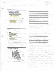 Cardio vascular system study guide
