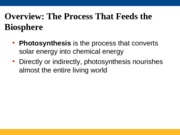 BSCI Lectures 18 & 19 Photosynthesis