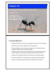 40_META_Animal_Form_2016_2slides.pdf