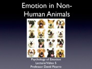 Emotion%20Lecture%202%202010%20Animal Emotions