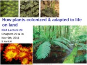 Lecture 20 The 4 Plant Groups