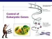 eukarya gene expression mine