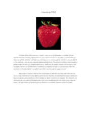 Strawberry_DNA_Protocol