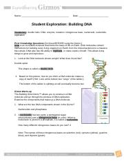 Student Exploration Building Dna Gizmo Answers Key Pdf ...
