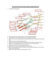 Muscles of the Pectoral Girdle and Upper Limbs Worksheet