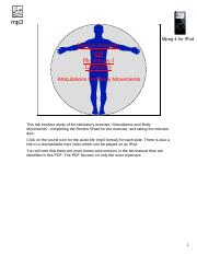 articulations_and_body_movements