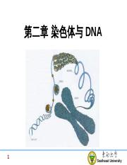2-Chromosome and DNA