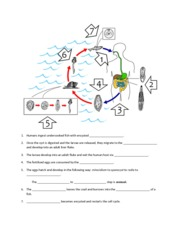 Plasmodium life cycle worksheet 6 after a few generations some 1 pages human liver fluke life cycle worksheet ibookread ePUb