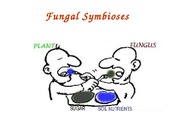 Lecture 11 - Fungal symbioses(1)