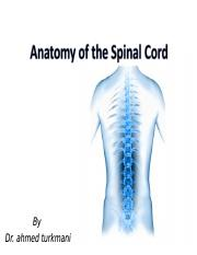Anatomy of the Spinal Cord.ppt