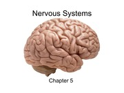 Nervous Systems_1477966