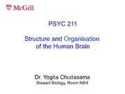 Lecture 4- Structure and Organization of the Brain