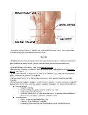 EEB 240 Abdomen Notes.docx