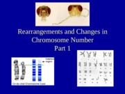 Lecture 15 Rearrangements and Changes in Chromosome Number