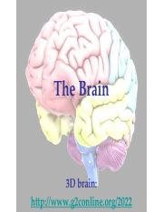 The Brain and The Nervous System II.pdf
