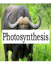 Photosynthesis_2016_posted(1).pdf