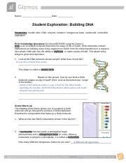 Building Dna Gizmo Completed Name Date Student Exploration Building Dna Vocabulary Double Helix Dna Enzyme Mutation Nitrogenous Base Nucleoside Course Hero