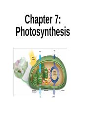 Bio 201, Chapter 7 - Fall 2015 (5).ppt