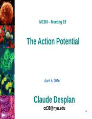 MCBII-19 2016 CD action potential
