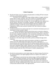 Free Essay On Process Of Photosynthesis Photosynthesis And Respiration