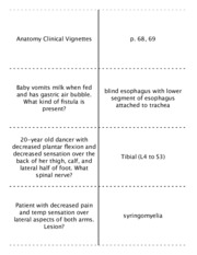 Vignettes- Anatomy, Behavioral and Biochem - sidebyside