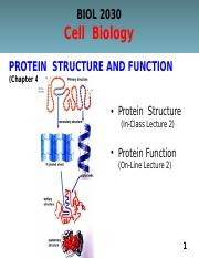 Lecture 2 (Ch.4) Protein Structure