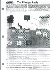 Nitrogen and Carbon Cycle
