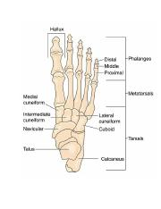 sports_med_anklefoot_practical