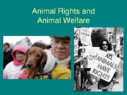 Animal%20Rights%20and%20Welfare