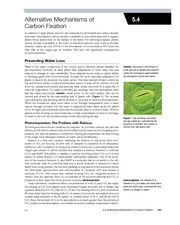 5.4 Alternative Mechanisms of Carbon Fixation