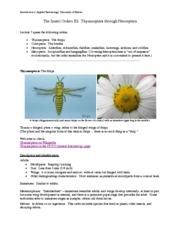 Orders- Thysanoptera through Coleoptera Lecture