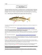 Stickleback+Evolution+Virtual+Laboratory.docx
