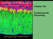 chapter14b Cardiovascular Physiology 2