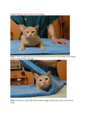 Scarf Wrap Your Cat in 5 Steps