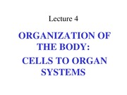 2. Organization of the Body (6:30:15)