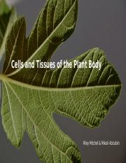 Chapter 23 Cells and Tissues of the Plant Body Parts.pptx