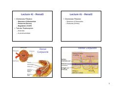 SCS2159-Lecture 41-renal 3