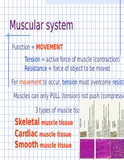 A__P_Muscular_system_with_quizzes